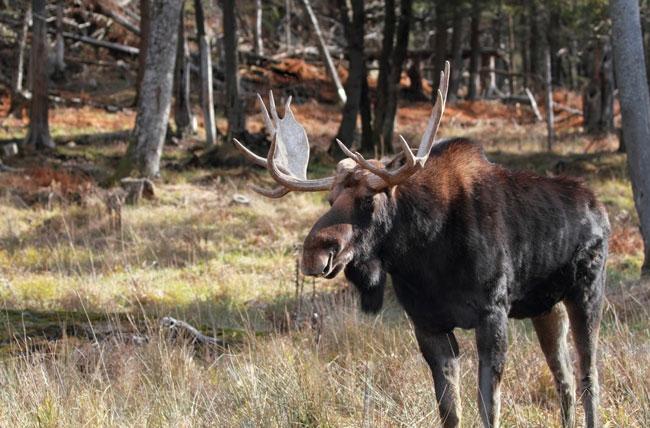 Wildlife in Zweden ontdekken